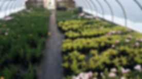 Perennials & Grondcover NJ NY.jpg
