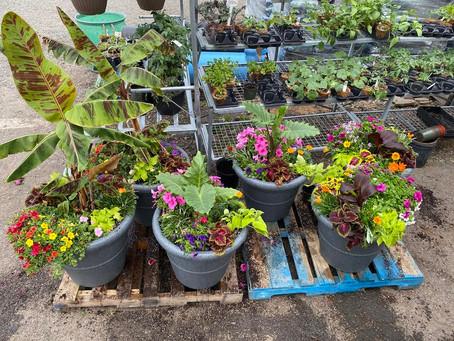 Planting Your Summer Arrangements