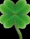 Debbie 4 Leaf Clover.png