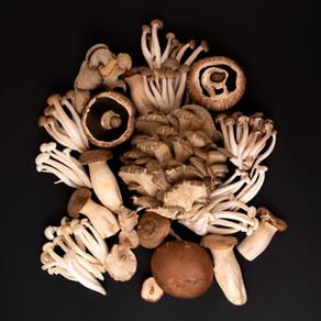 Estipes de Shiitake em pó: o cogumelo que se tornou ingrediente
