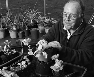 Photo of an elderly man caring for plants in a greenhouse