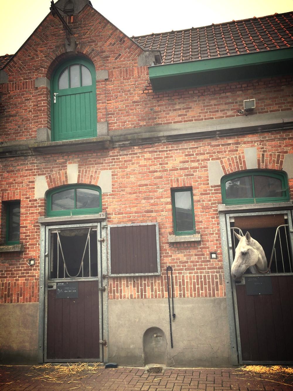 un cheval à sa fenêtre
