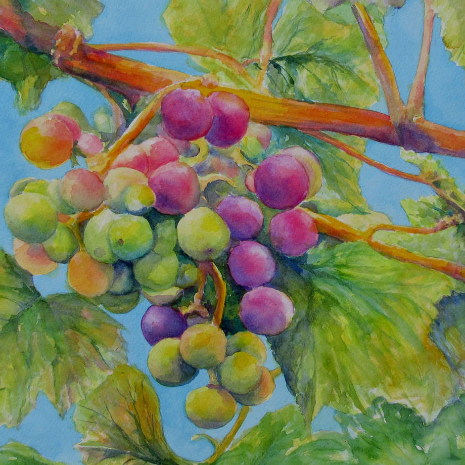 Fruit of the Vine, Claire Bartlett
