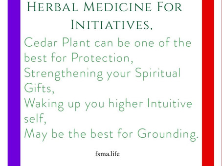"""""""Cedar Plant"""", Feed Your Spiritual Gifts. Strike Your Gifts to the Sky!"""