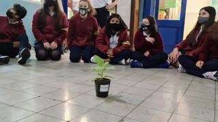 Plantaron un árbol