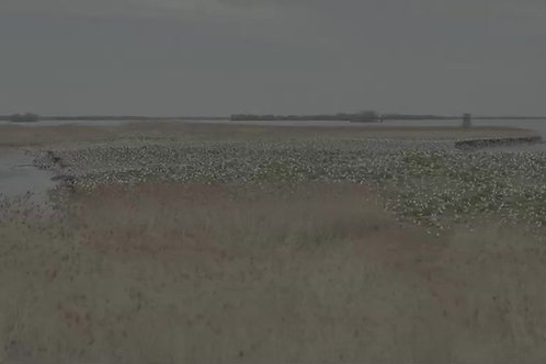 Iles-goelans-fleuve-st-laurent