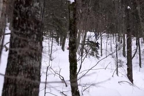 Parc-Jacques-Cartier-Winter