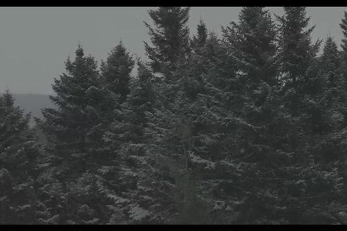 Foret-neige-abondante
