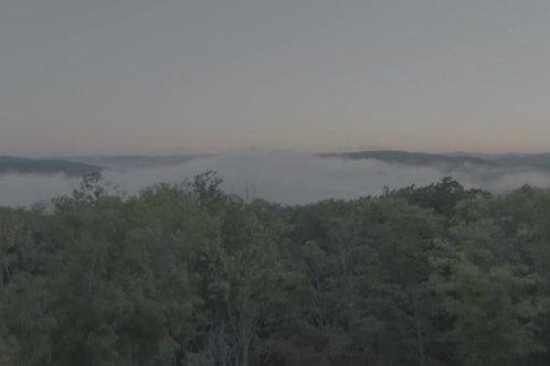forest-laurentide-dawn