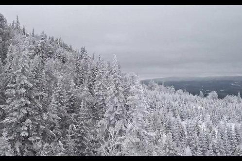 foret-neige1
