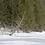 Thumbnail: lac-glace-arbre