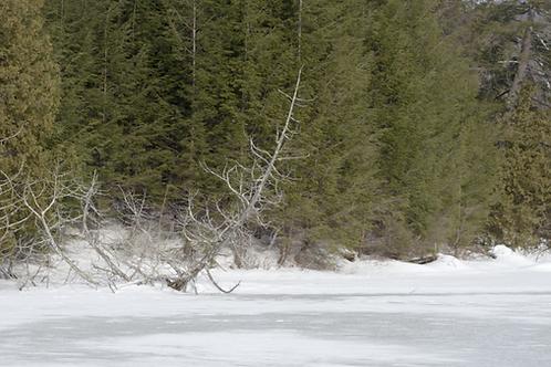 lac-glace-arbre