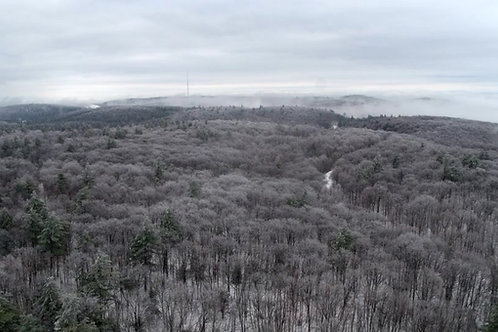WINTER-FOREST-TOP