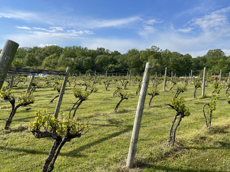 Farm, Fun, and Wineries Close to Baltimore