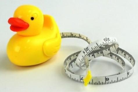 RMG site duck.jpg