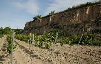 sand vineyard.jpg