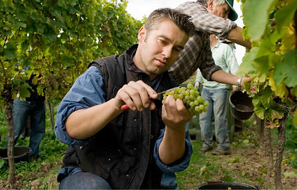 philipp in the vineyard.jpg