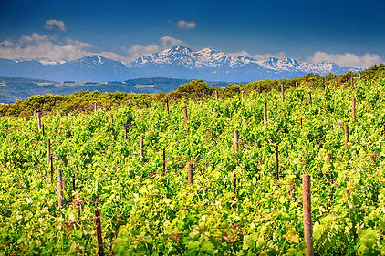 Vignes-2-PHOTO-2-DU-SLIDER.jpg