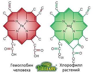 структура хлорофилла и гемоглобина человека