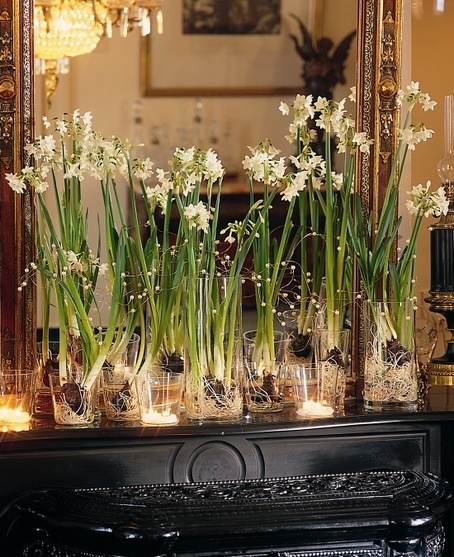 DIY:  FORCING PAPERWHITES FOR THE HOLIDAYS