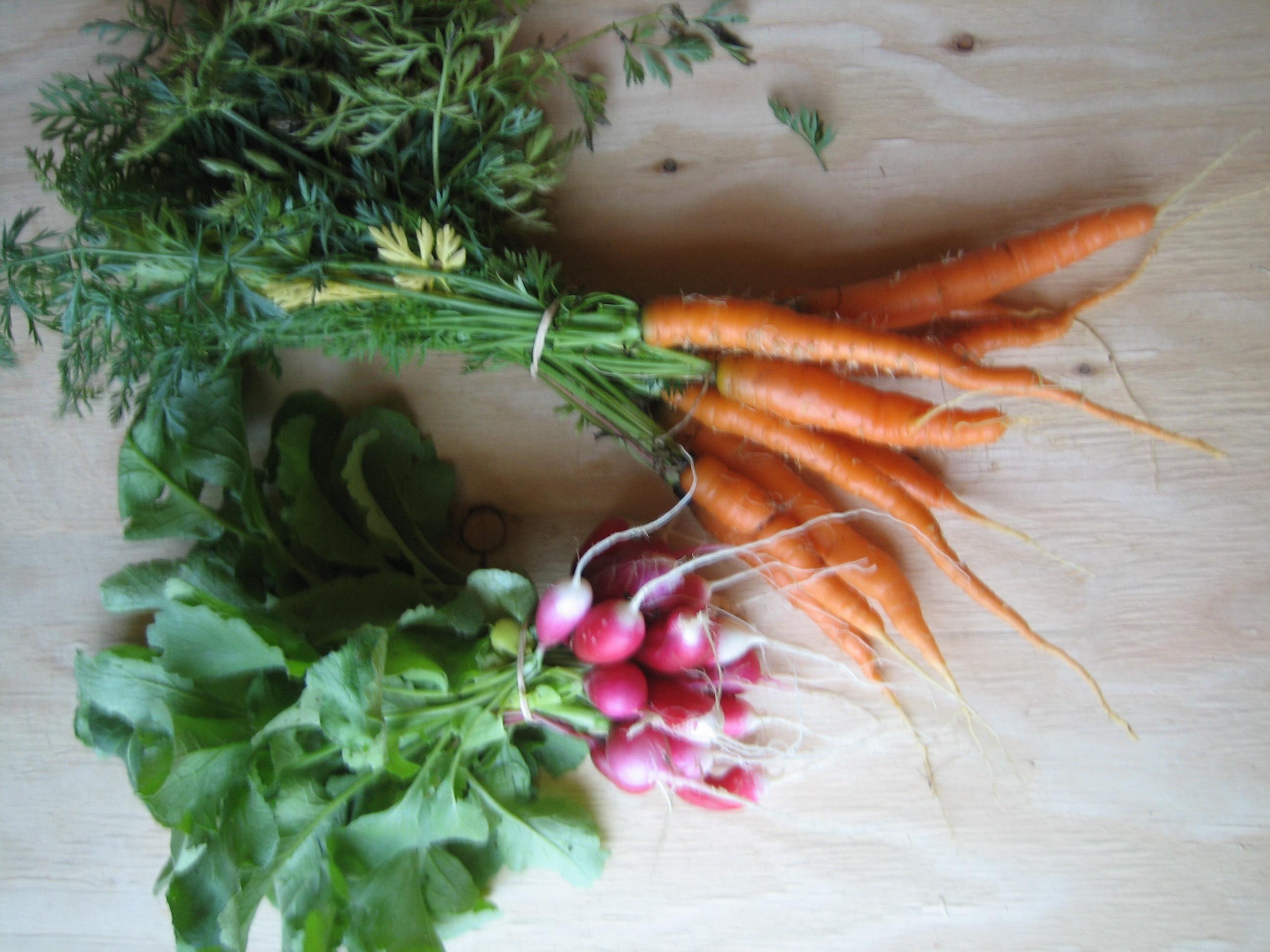 radish carrot