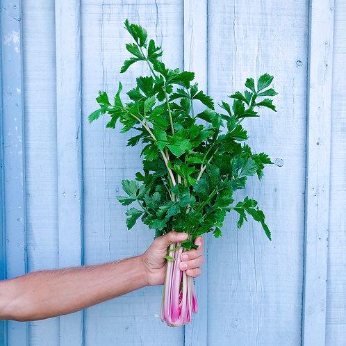 Pink Celery