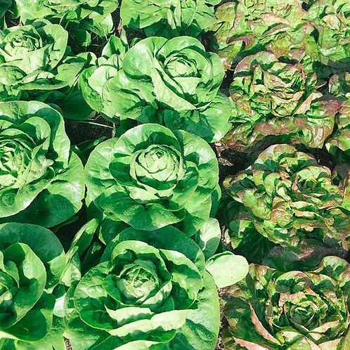 Gourmet Spring Garden Blend Salad Mix