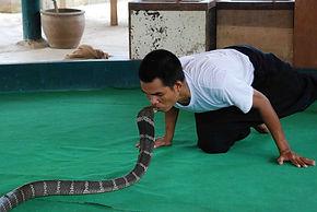 chiang-mai-mae-sa-snake-farm-1 - Copy.jp