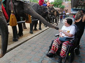 Elephant-Ground-2.jpg