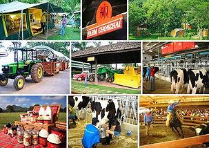 Chokchai-farm-2.jpg
