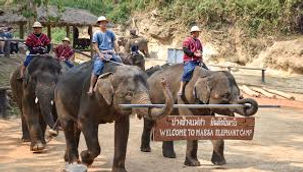 Elephat at work -2.jpg