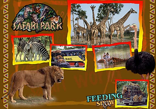 Accesible Tours SafariWorld-5.png