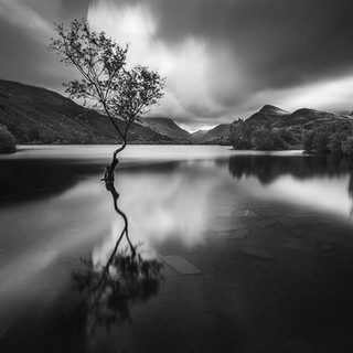 Llanberis, The Lone Tree