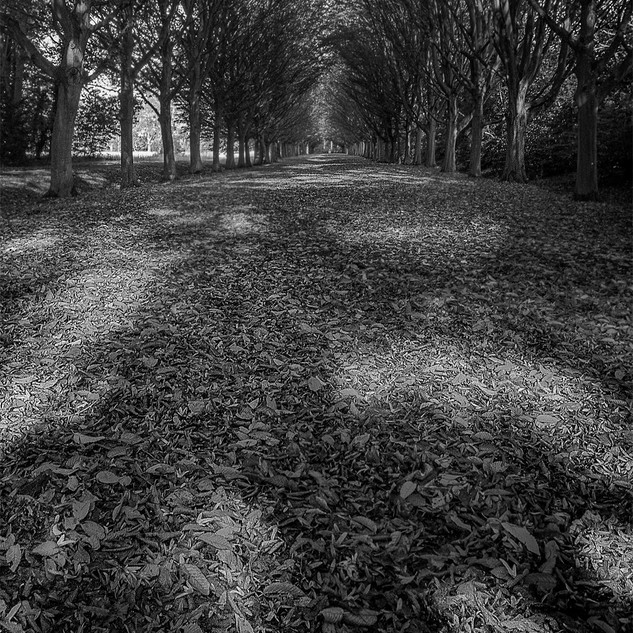 The Avenue at Anglesey