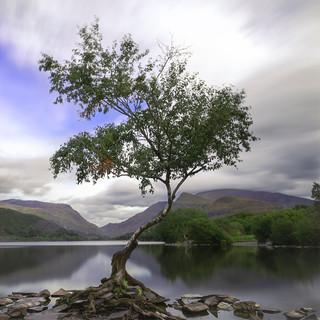 The Lone Tree llanberis