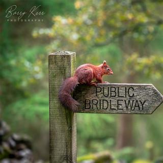 Public Footpath Squirrel