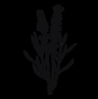 Lavender-Illustration.png