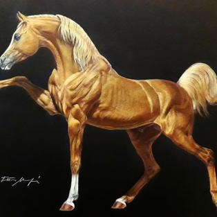 THE HORSE HOPE