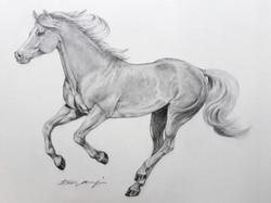 THE HORSE NERO