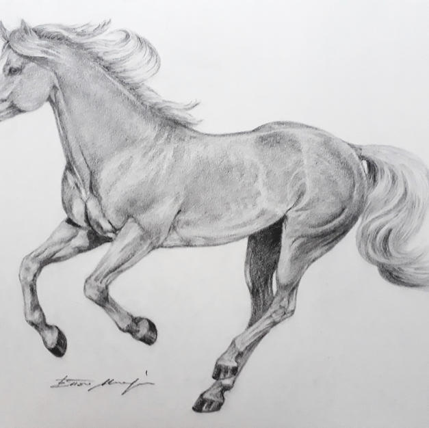 THE HORSE NERO GALLOPING