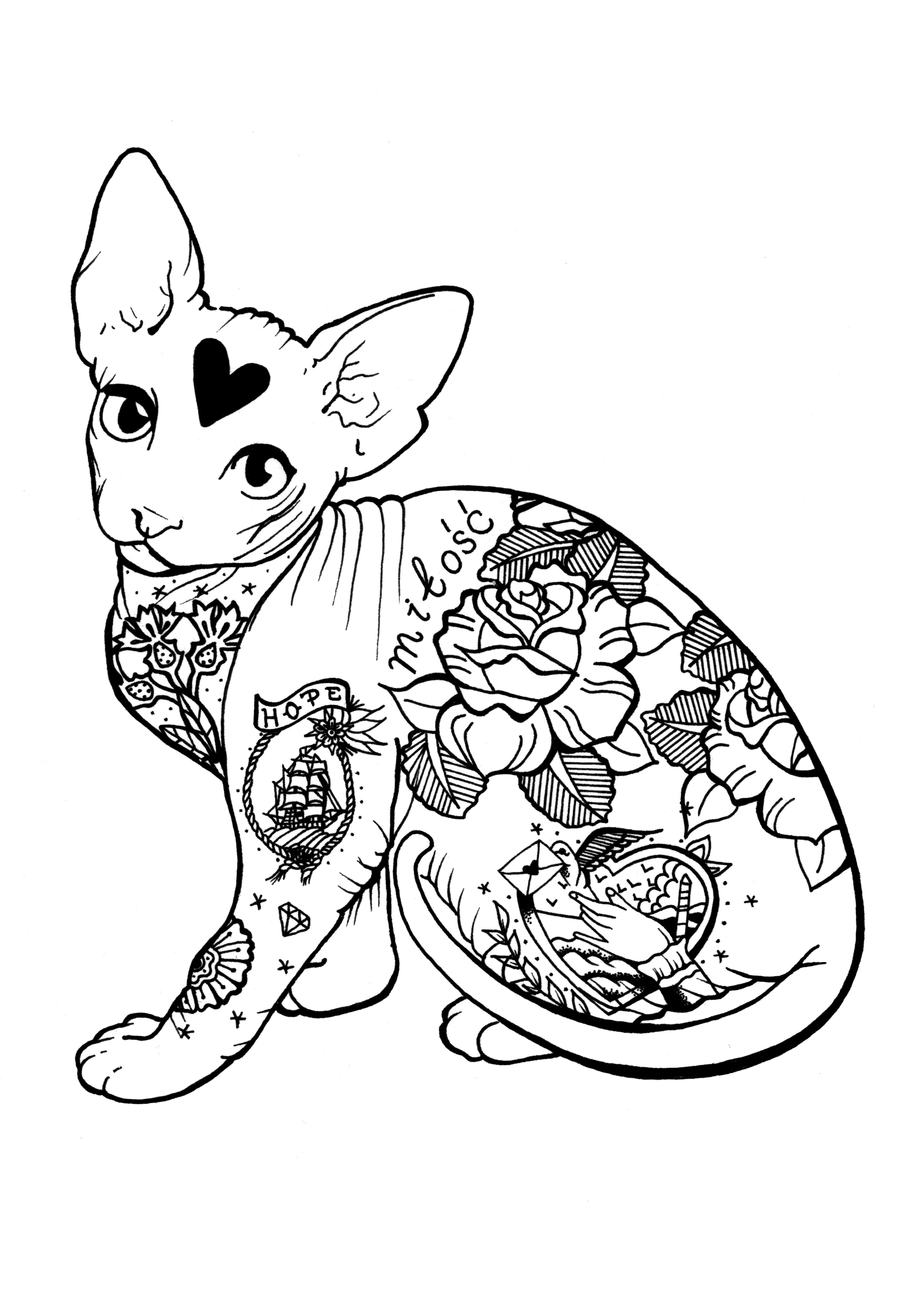 Sphynx Cat by N.L.
