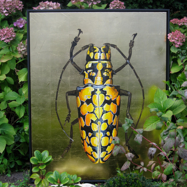 Harlekin Käfer
