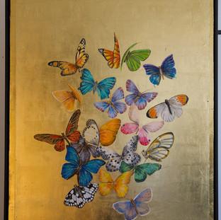 Schmetterlings Kolonie