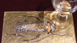 Leoparden-Käfer