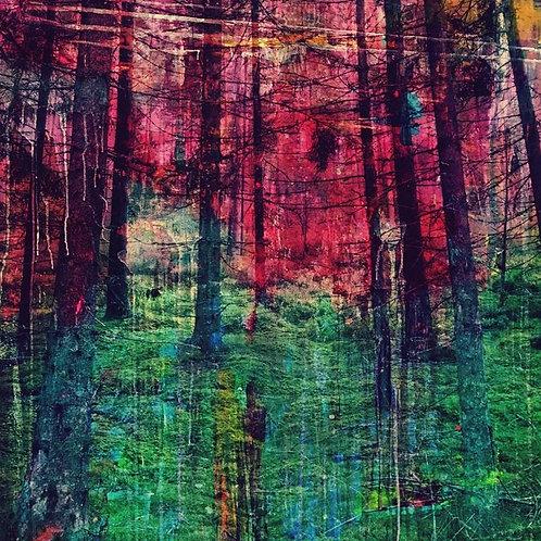 """Into the Woods"", Giclèe, 25 x 25 cm"