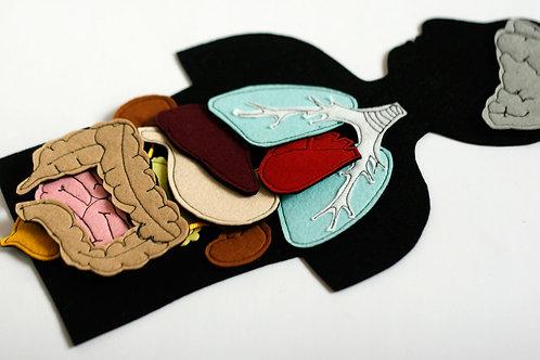 Felt Anatomy set Internal human organs, 30x20cm