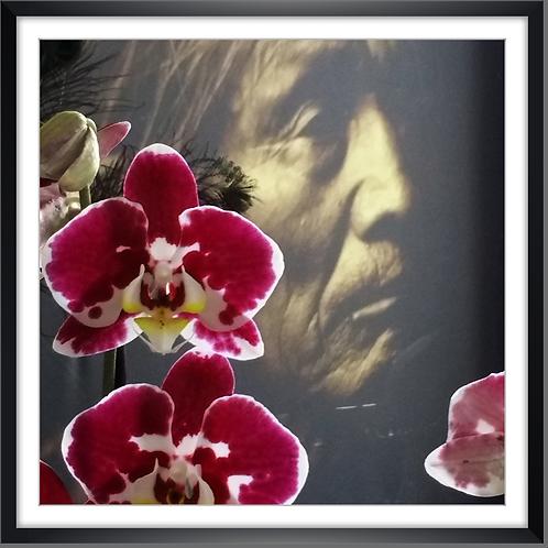 Indien orchidée