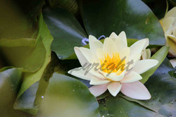 Flowers, Nature (38)