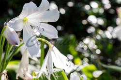 Flowers, Nature (9)