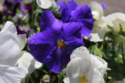 Flowers, Nature (6)